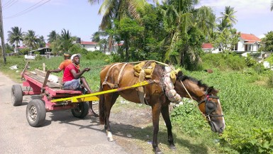 This horse cart driver paused his work for his horse to have a meal.