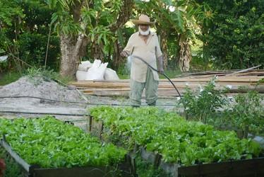 Khaliel Rahman watering his lettuces.