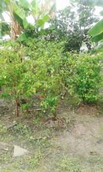 A section of Khado Singh's kitchen garden.
