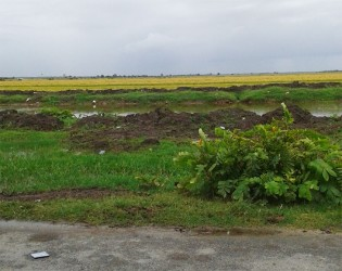 Some of the rice lands in the village.