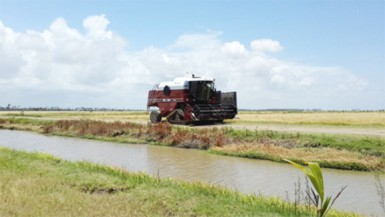 A combine at work at Paradise, Essequibo Coast reaping rice