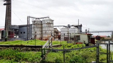The Caricom Rice Mill, the largest in Guyana, doesn't buy sample paddy, which is a lower grade of paddy due to its higher percentage of damage. Farmers note that the paddy bug has ruined large portions of this crop so the sale of paddy is very dependent on whether millers are willing to purchase damaged paddy.