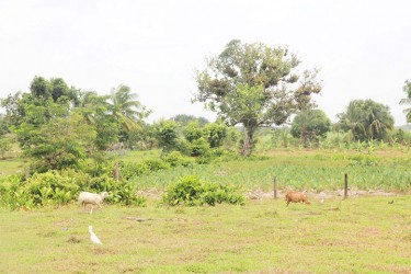Animals grazing and one of the farms behind