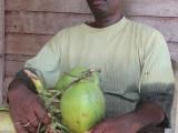 Joseph Harmon with a few remaining coconuts from a cluster he harvested
