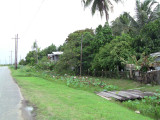 The village hidden by much greenery