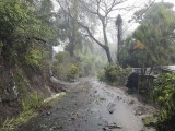 Debris covers road after heavy rains from Tropical Storm Erika on Caribbean island of Dominica in this picture from Robert Tonge, Dominican Minister for Tourism and Urban Renewal, taken August 27, 2015 REUTERS