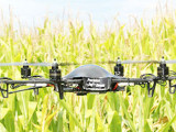 Drone being used to examine corn