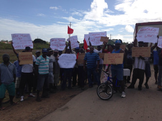 Albion sugar workers and GAWU representatives picketed GuySuCo's offices yesterday.