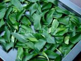 Fresh Curry Leaves (kariveppilai/kari patta) (Photo by Cynthia Nelson)