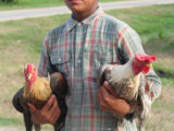 David with two of his roosters: Red Diamond and Silver Diamond
