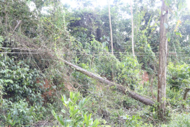 One of the electrical poles located near a Pearl farm that was uprooted during a storm three weeks ago.