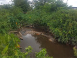 mongrippa-creek