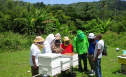 Inspecting hives at the recent Tobago Congress