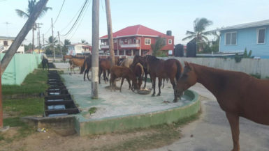 A team of horses feeding at the Main and Rose Street, Enterprise residence