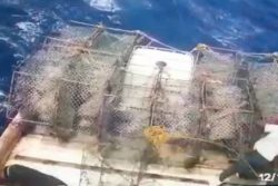 A screenshot from the video shows Navishwar Karamdatt trying to hold on shortly before he fell overboard.