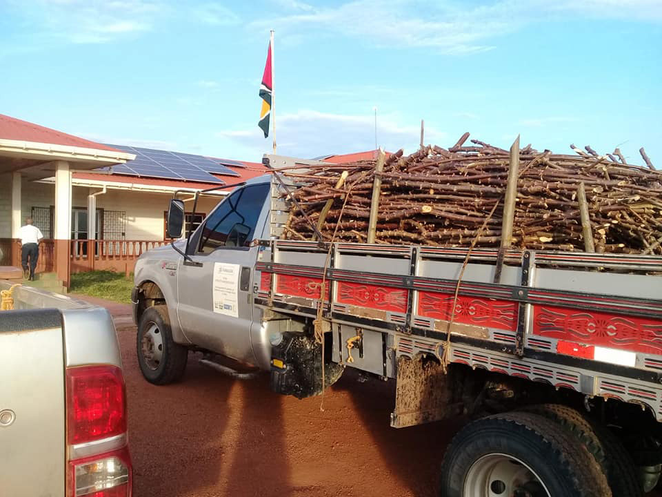 Sticks of the new variety of cassava that were gifted to farmers of Region Nine. (Photo taken from Region 9 RDC Facebook page)