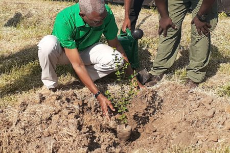 President David Granger planting the first tree at the National Tree Day 2019 observance at Union Village, Corentyne yesterday. (Bebi Oosman photo)