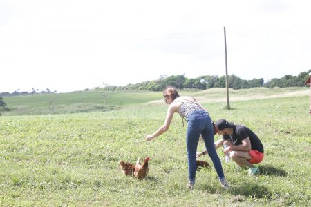 Visitors petting the chickens