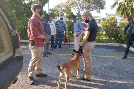 American and Guyanese canines getting acquainted prior to the arrival of US Secretary of State Mike Pompeo on Thursday.  The dogs were part of the security arrangements. (US Embassy photo)