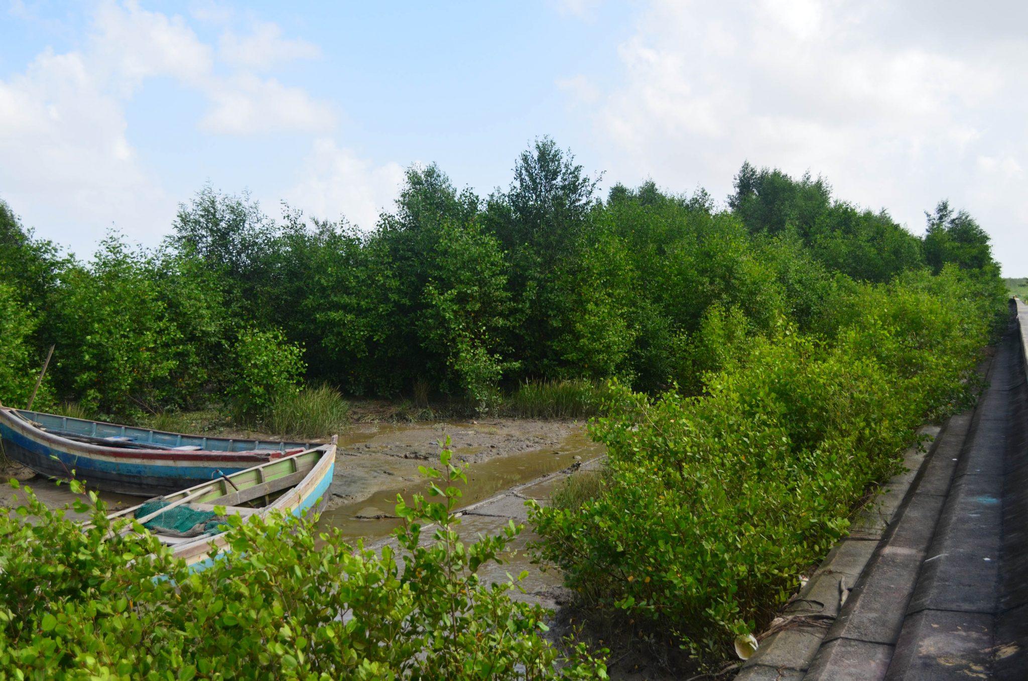 Guyana-mangroves