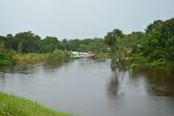 The swollen Pomeroon River at Karawab where the land and the river are one (Orlando Charles photo)